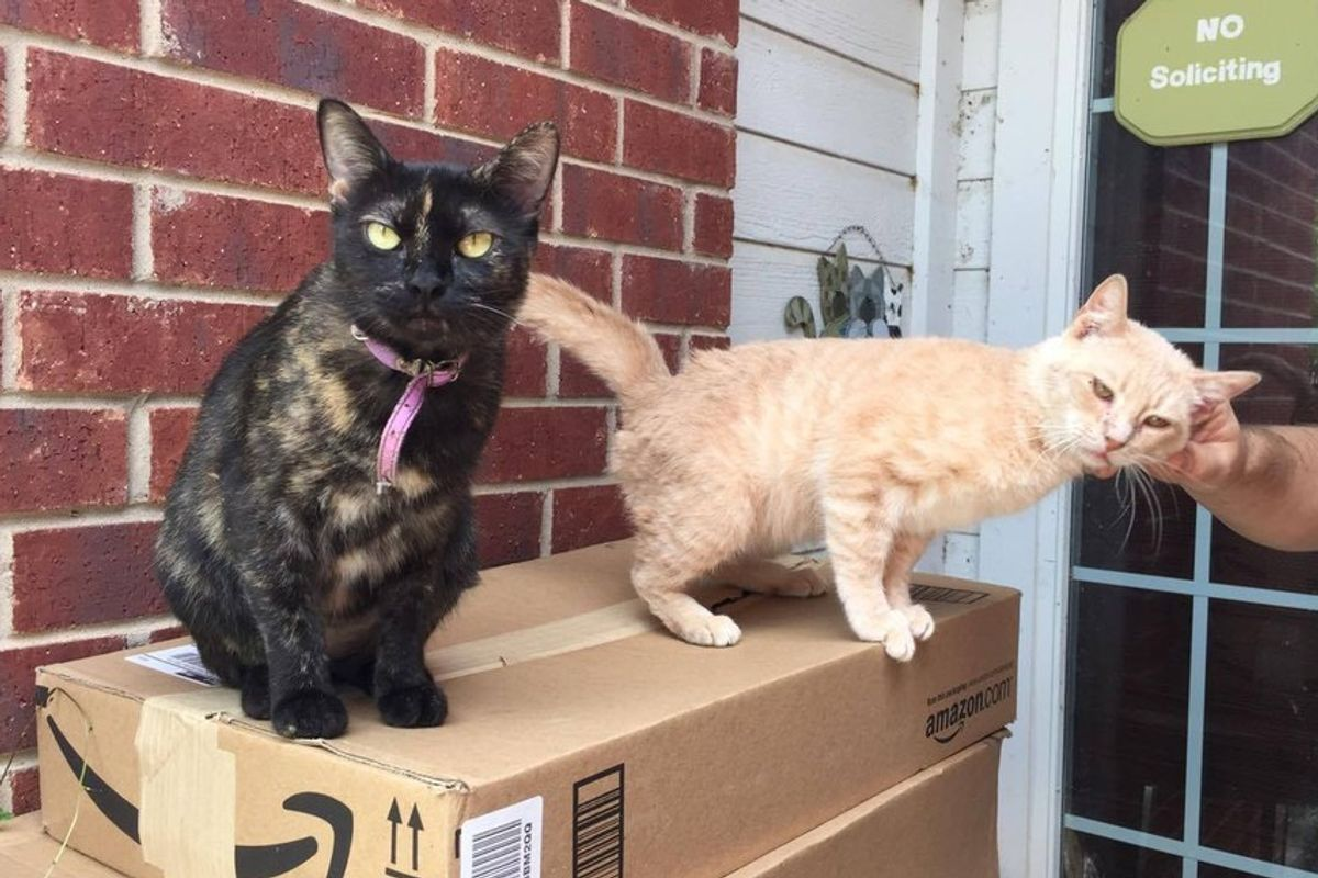 Resident Cat Brings Home a Boyfriend, a Stray Cat, Who is Asking for Love