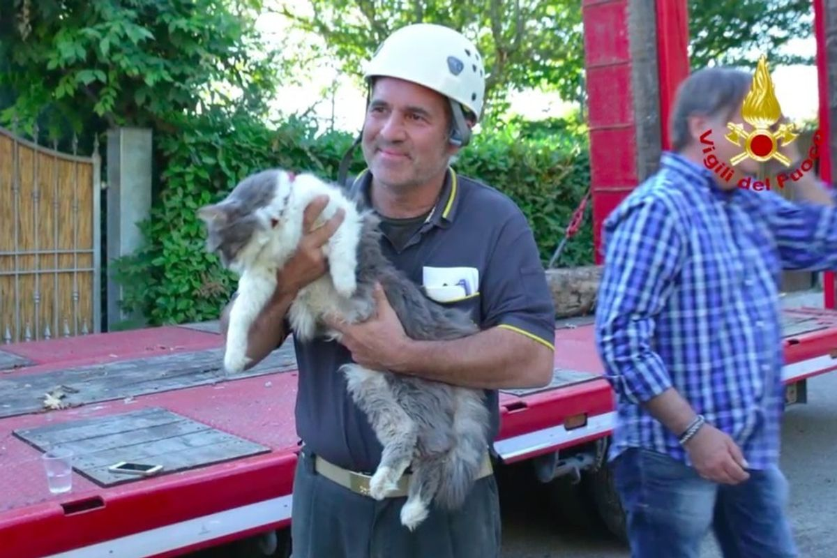 After 32 Days Rescuers Find Cat Alive Under Rubble
