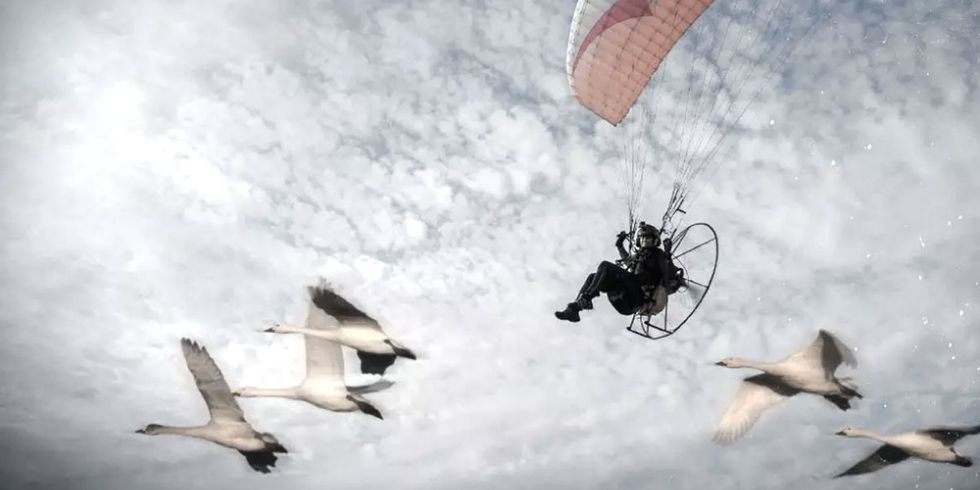 Daring Conservationist Takes Off on 4,500-Mile Migration With Swans