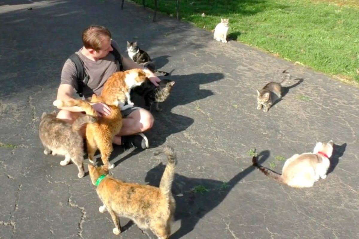Guy Spends a Day in Cat Paradise to Hang Out with Hundreds of Rescue Kitties