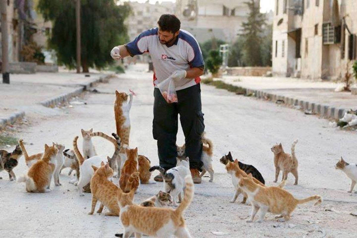 This Man Cares for Cats Left Behind in War Zone and Will Stay with Them No Matter What Happens