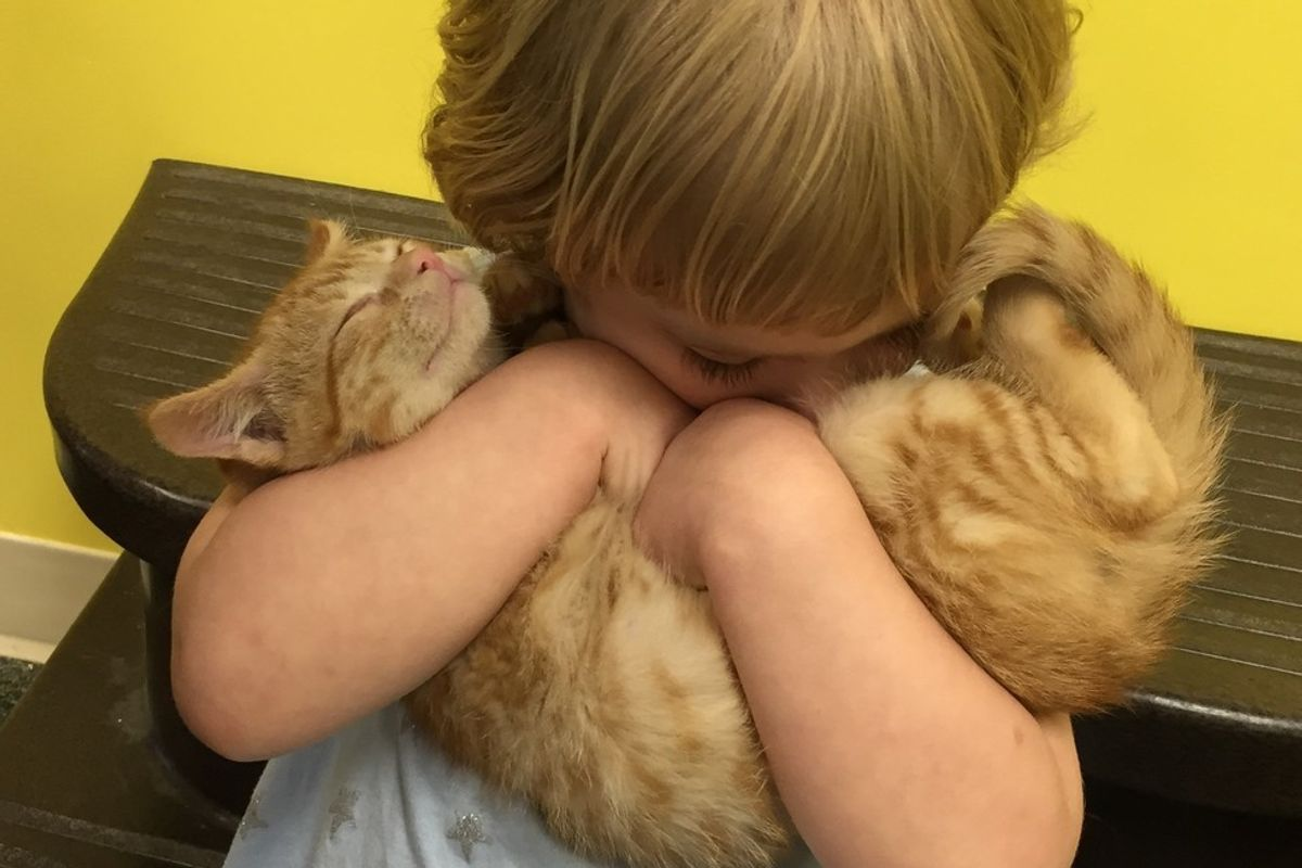Shelter Kitten and 2 Year Old Girl Choose Each Other, Now Three Months Later...