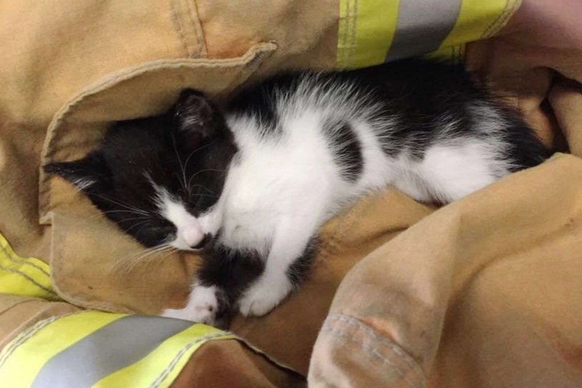 Kitten Ejected from Car in Rollover Accident is Saved in Miraculous Way