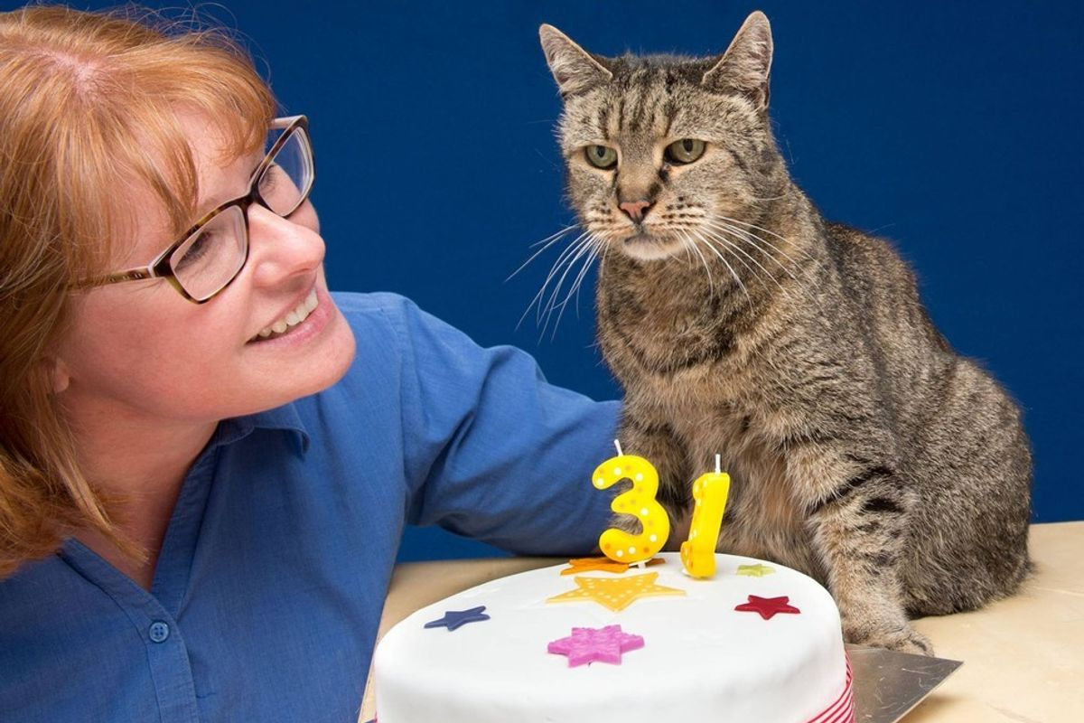 32-year-old Cat Who Found His Humans 27 Years Ago, Left an Incredible Legacy...