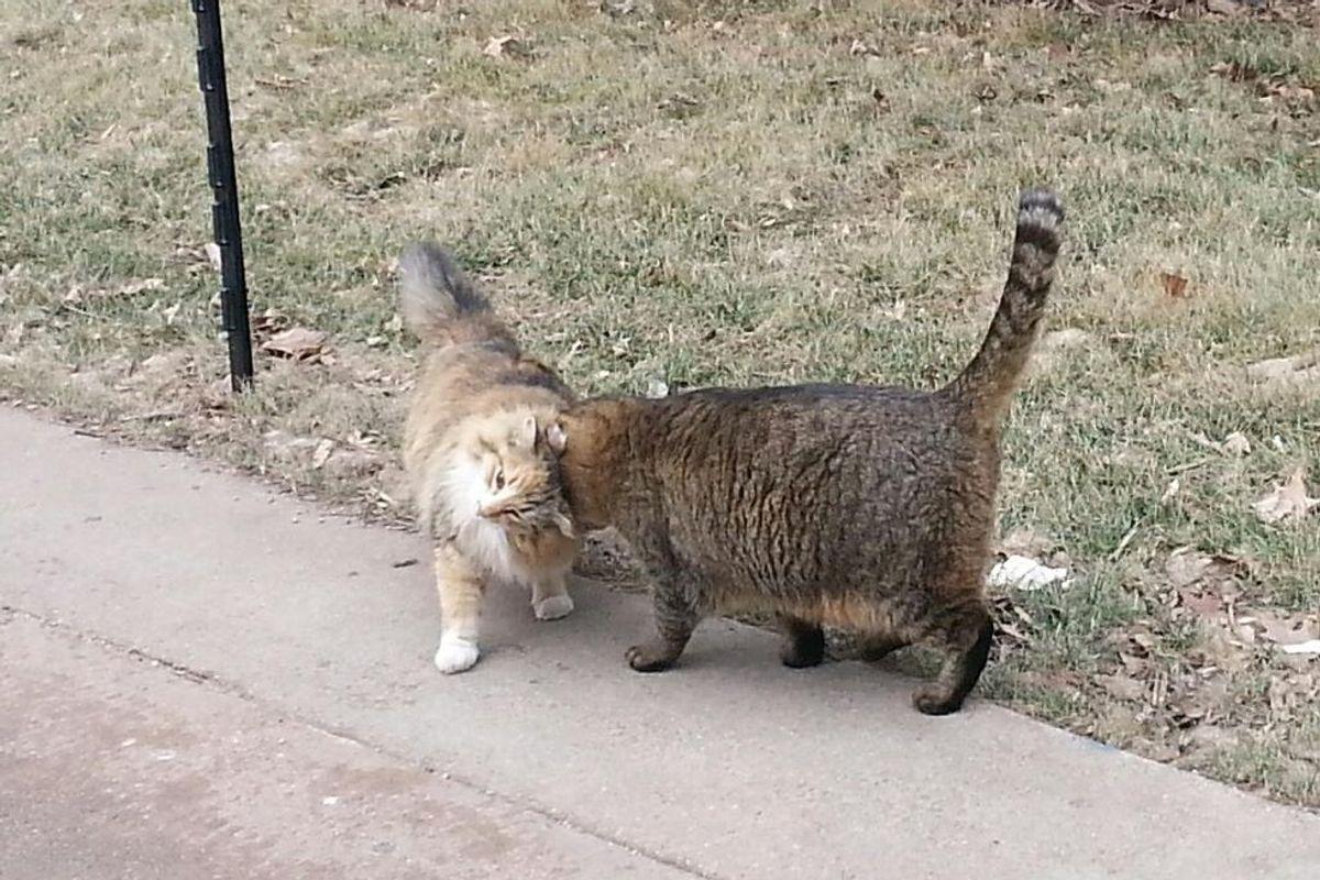 A School in Nebraska is Run by Colonies of Very Happy Feral Cats