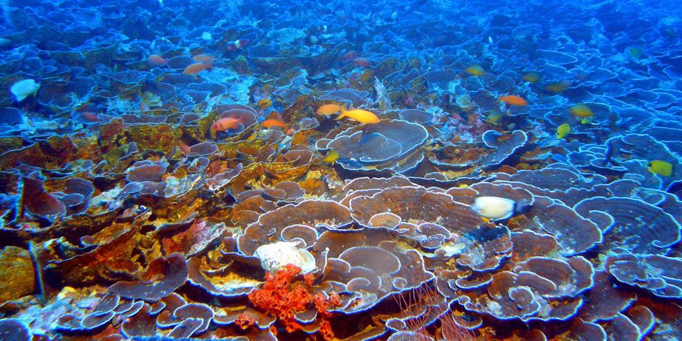 Scientists Just Discovered the World's 'Most Expansive Coral Reef Systems Ever Recorded'