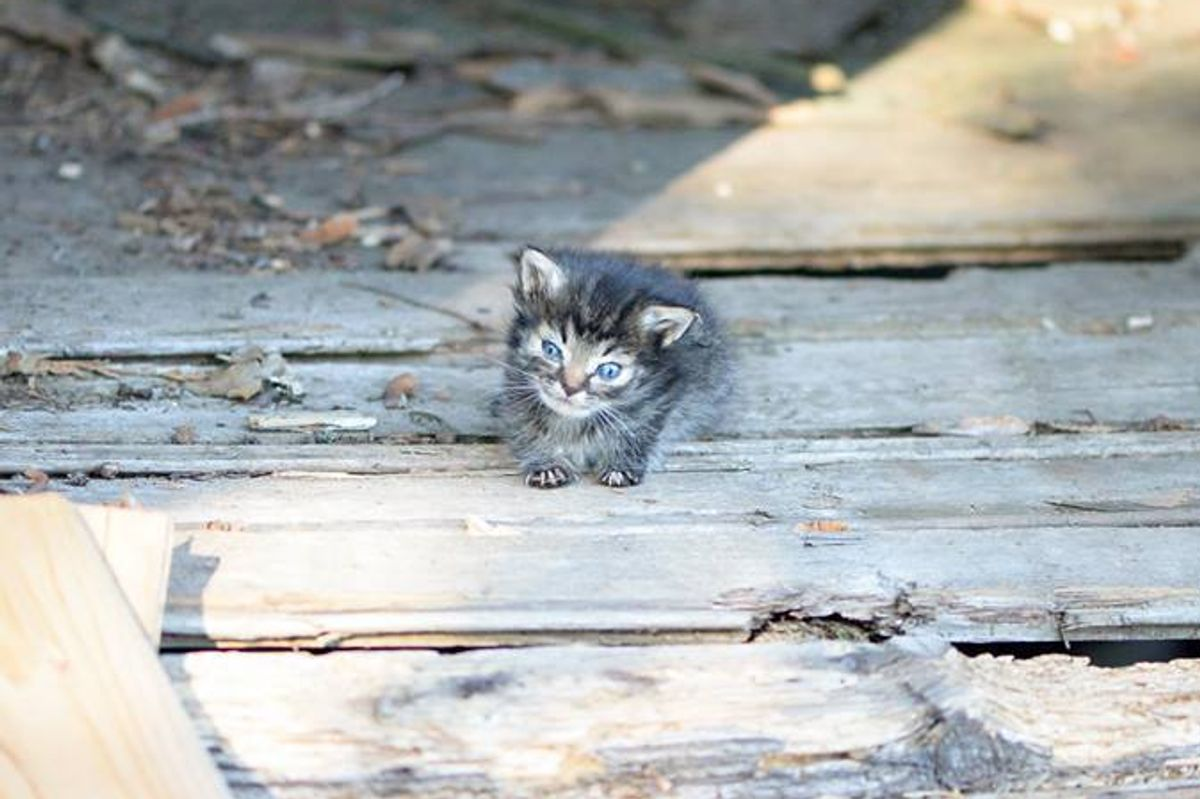 Tiniest 5-week-old Kitten They Ever Rescued, What a Difference 3 Days Can Make