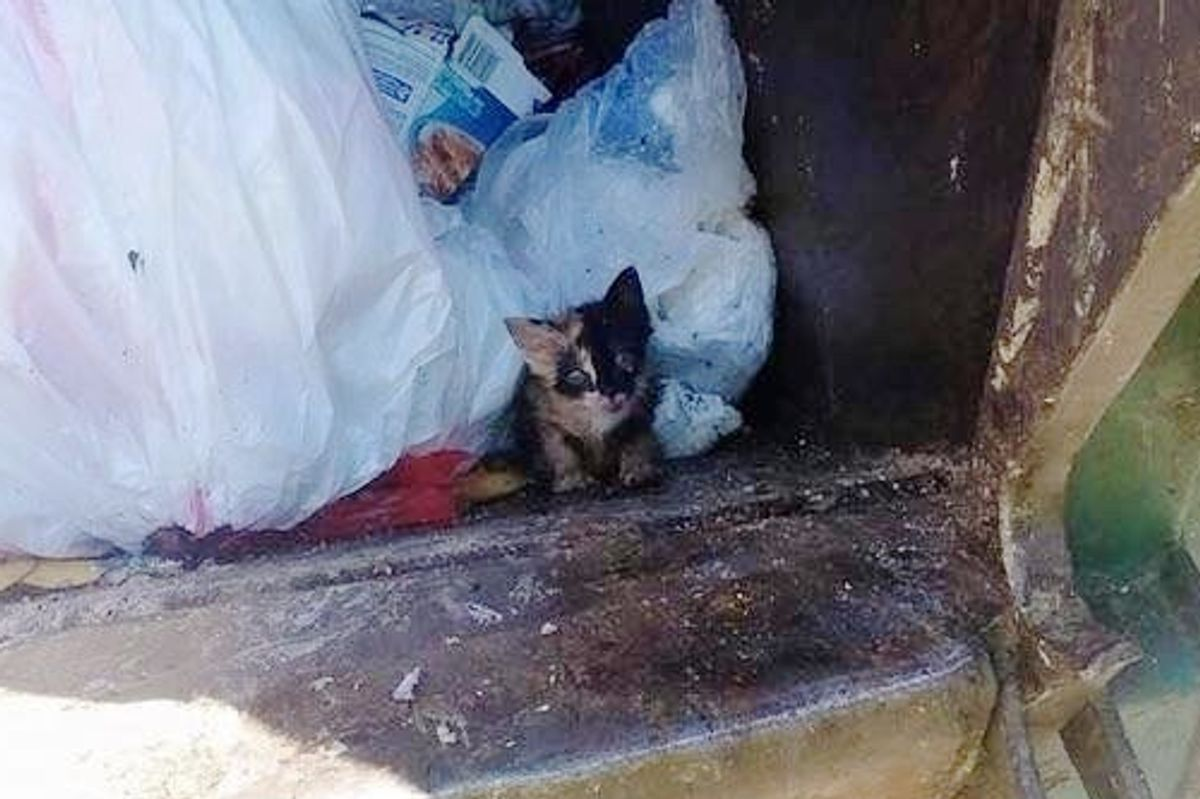 Trash Worker Saves Tiny Kitten Found in His Truck