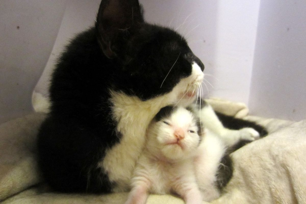 Cat Fights to Live Despite Trauma So She Can Save Her Only Kitten (with Updates)