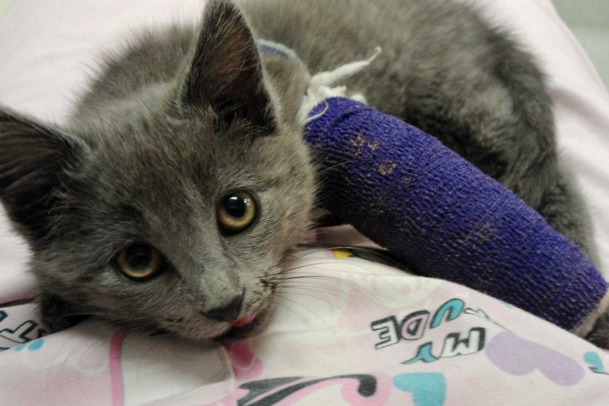 Woman Refuses to Give Up on Kitten Saved from the Road Even When Told to, Now 3 Years Later..