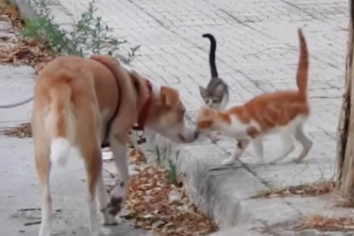 Rescue Dog Helps Feed 30 Stray Cats Every Day and Save Their Lives