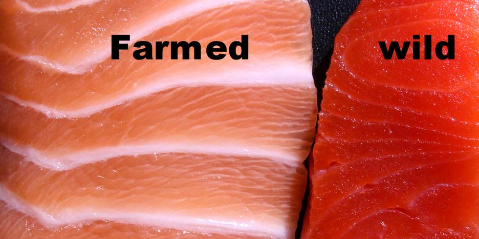 Farmed Salmon Delivers Half the Omega-3s of Five Years Ago