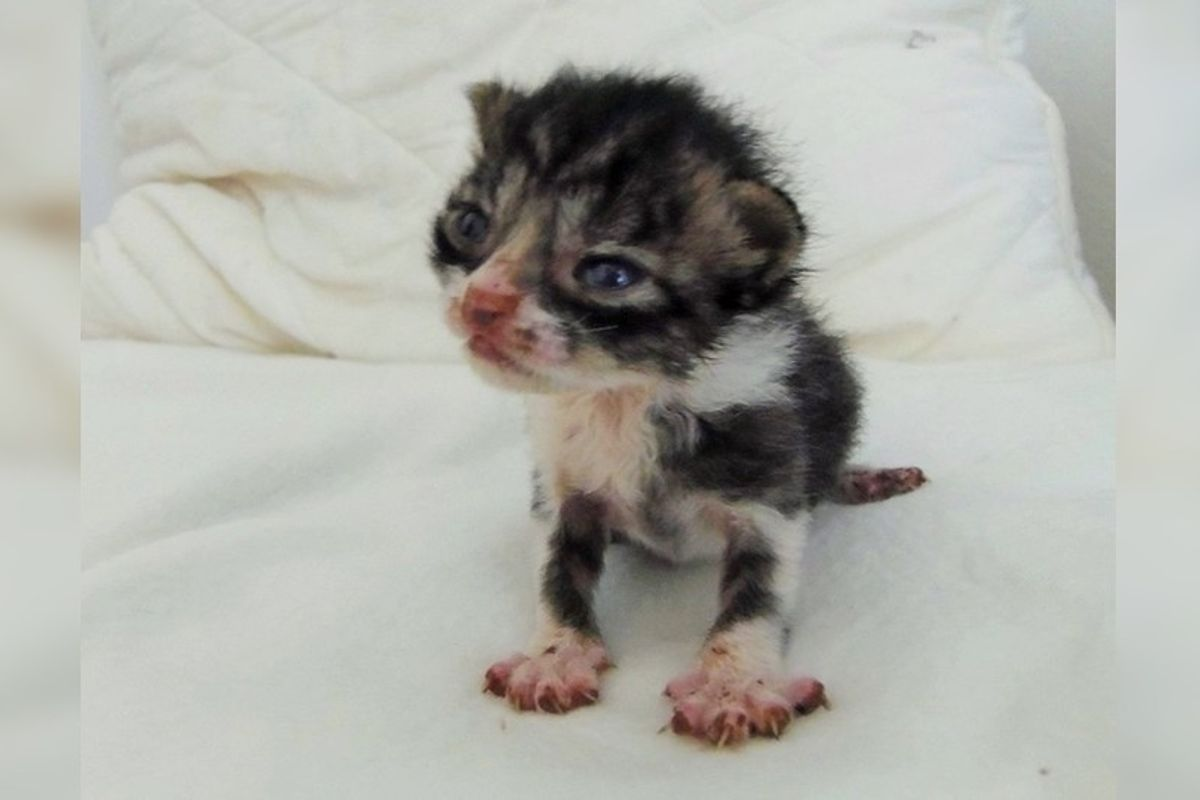 Tiniest Orphaned Kitten Found in Field Cries Out for Love, Then and Now...