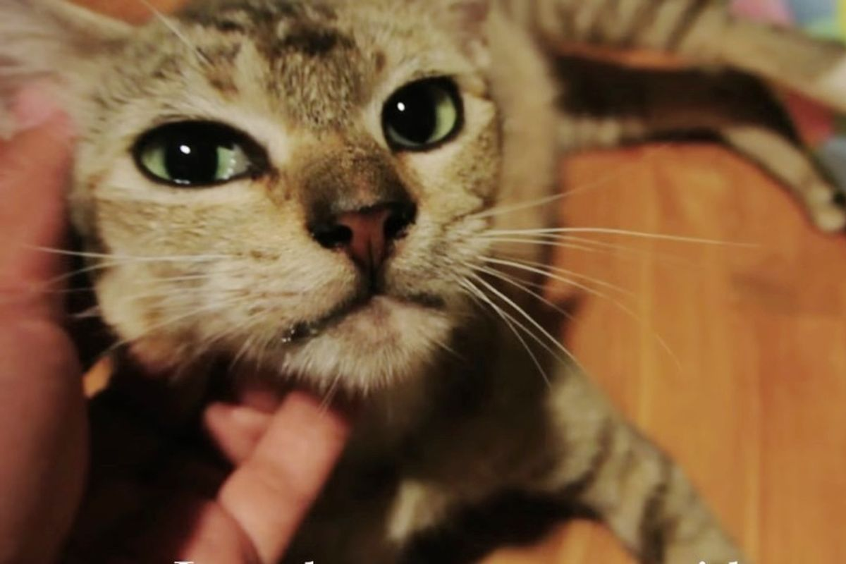 Very Pregnant Stray Cat Runs Up to Man, Meowing for Help