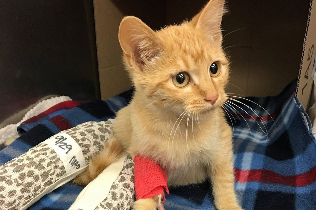 They Save Cat with Broken Legs and Help Him Walk Again, What a Difference Two Weeks Make