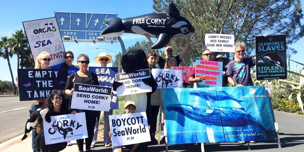 Protesters Demand SeaWorld 'Send Corky Home'