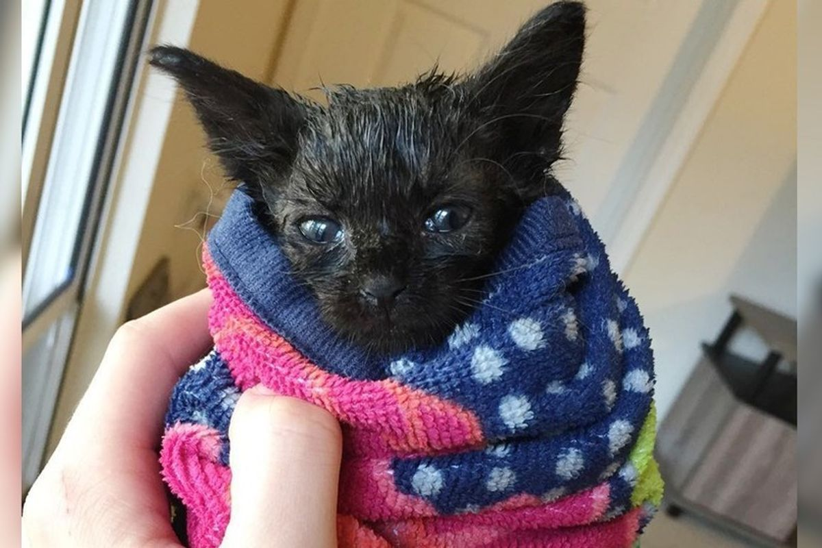 Kitten Found During Hurricane Storms Can't Stop Purring After Being Saved