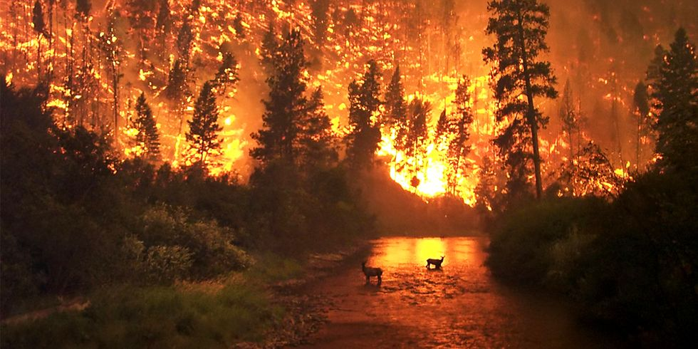 Man-Made Global Warming Root Cause of Relentless Forest Fires