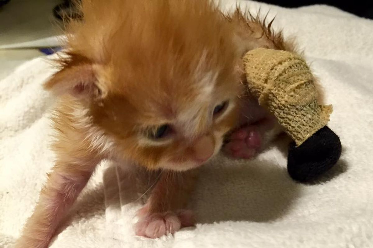 Kitten Found with Leg Tangled in Grass, is Turned Around by Love, Then and Now
