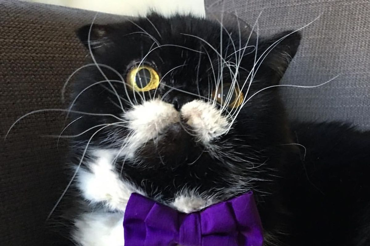 Rescue Cat with the Craziest Whiskers from Neglect to Loving Home