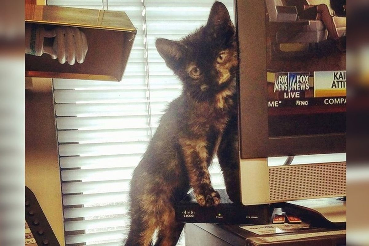 Kitten, Who Hid in Car Engine During Hurricane Matthew, is Looking for Home