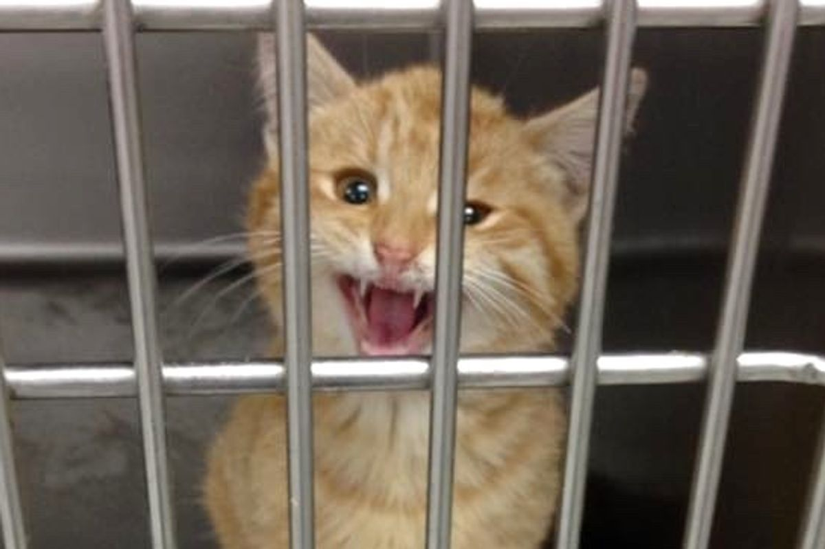 Ginger Kitten with Broken Leg Asks Woman for Help, She Couldn't Say No