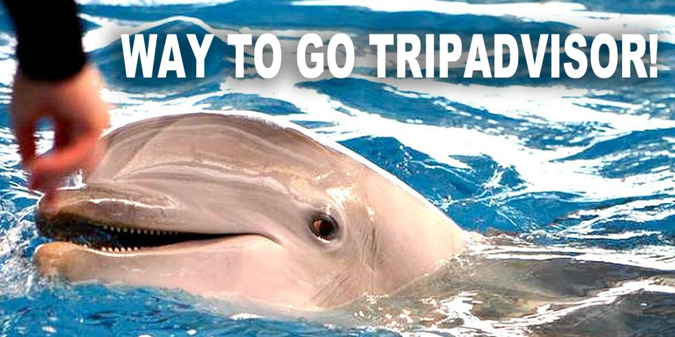 TripAdvisor Ends Bookings to Wildlife Attractions