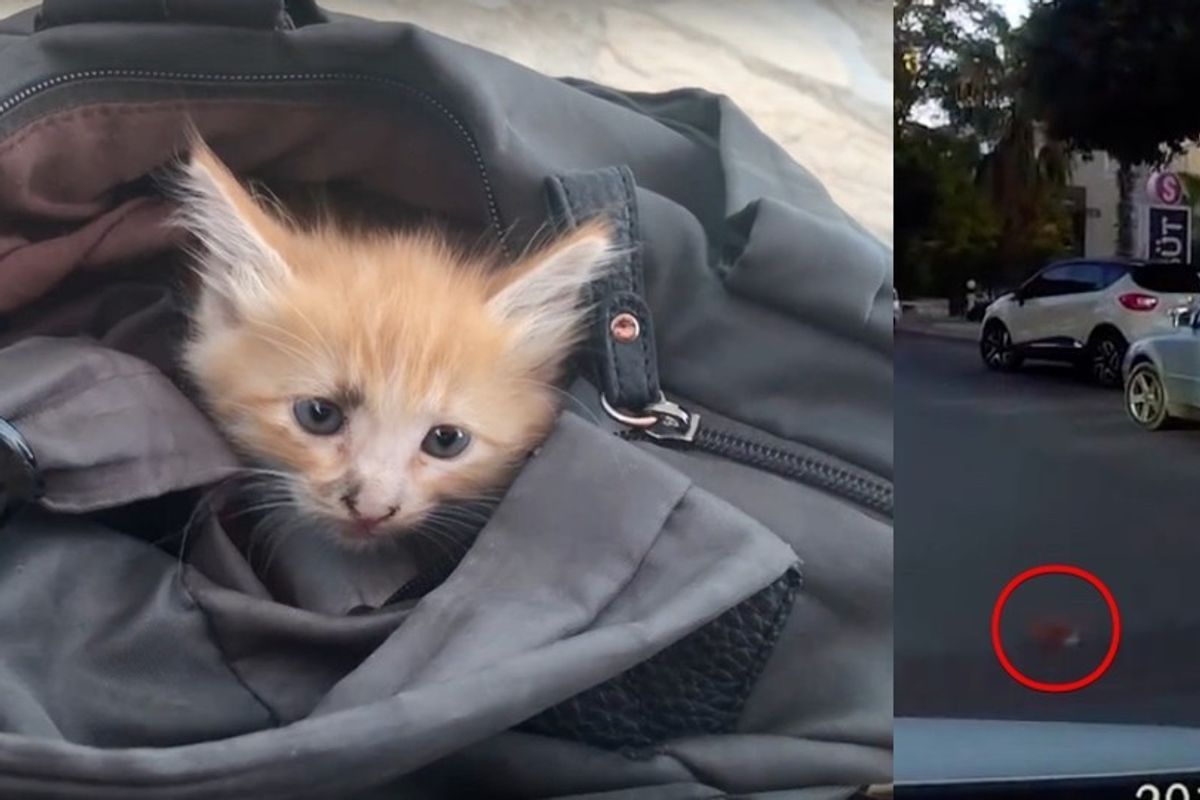 They Rescue Kitten from Middle of Road While No One Else Stops to Help