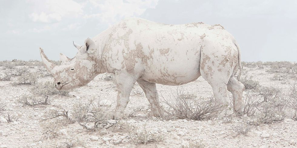 8 Incredible Images Win Top Prize for 'Illustrating the Rich Diversity of Life on Earth'