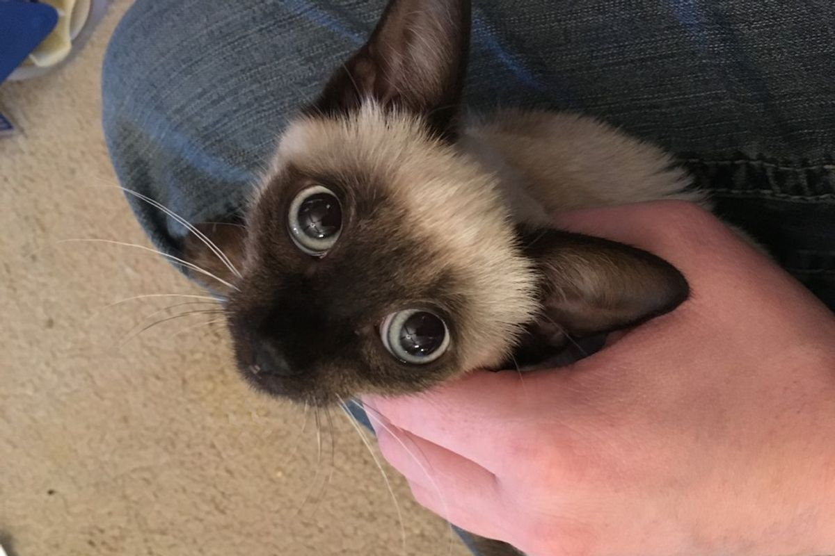 Fearful Roadside Kitten Experiences Love for the First Time, It Changes Everything