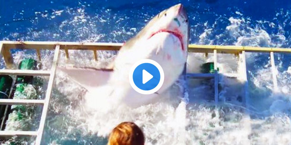 Viral Shark Video Shows Why Tourists and Wildlife Entertainment Don't Mix