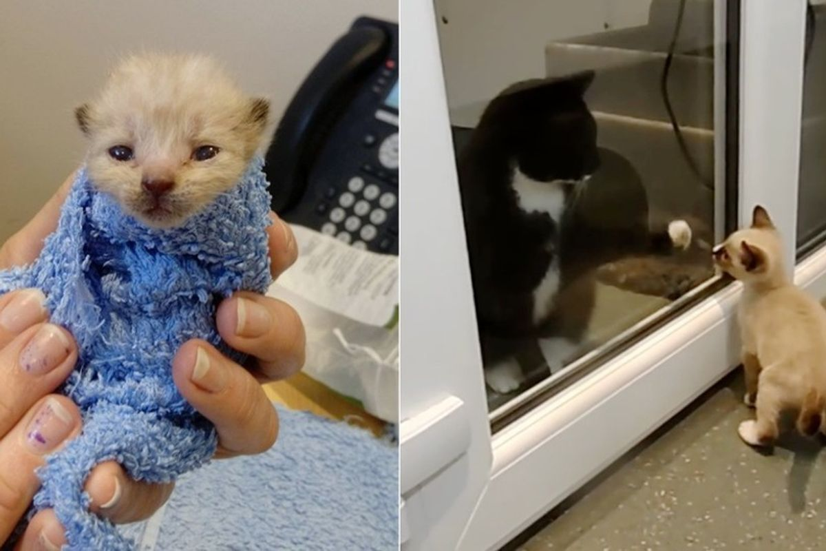 Kitten, Who Cheated Death, Gives Comfort to Other Kitties Just Like Him