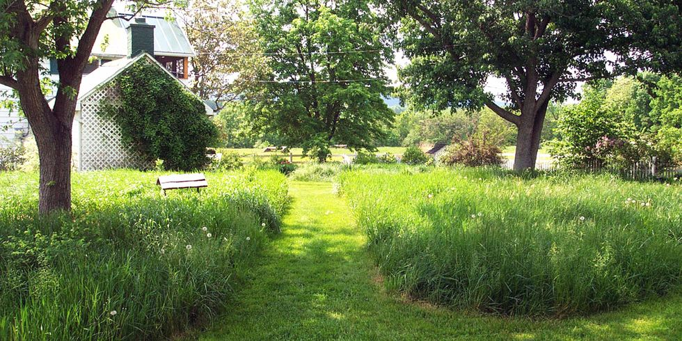 It's Time to Get Rid of Your Lawn!