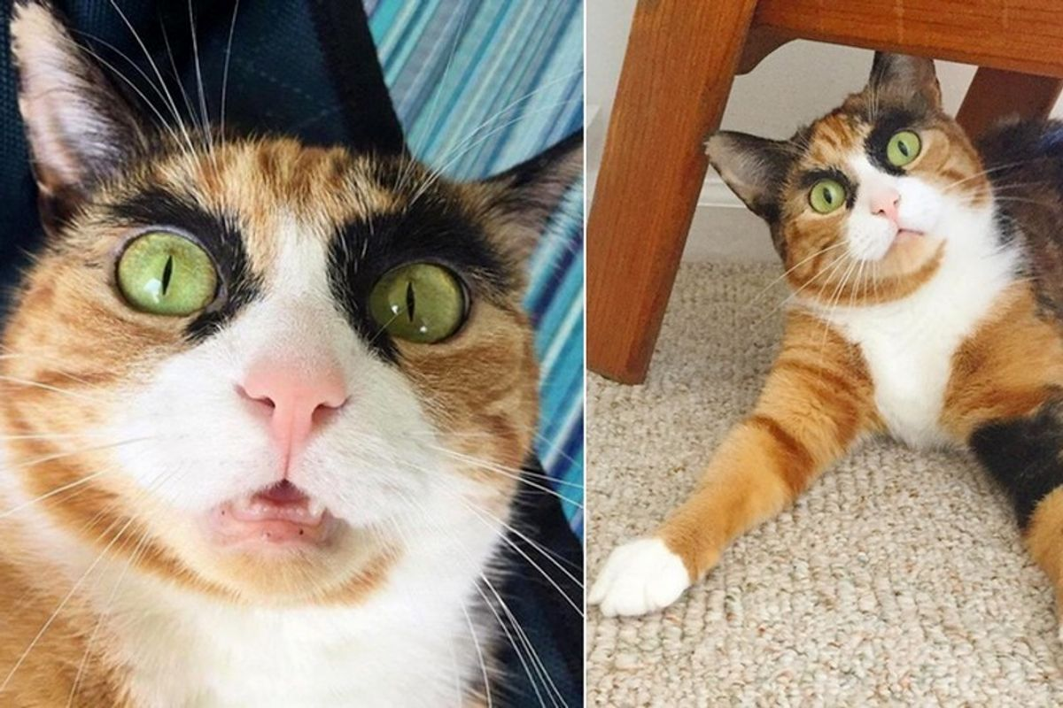 Calico Cat Judges Her Human Everyday with Those Crazy Eyebrows.. (10+ Photos)