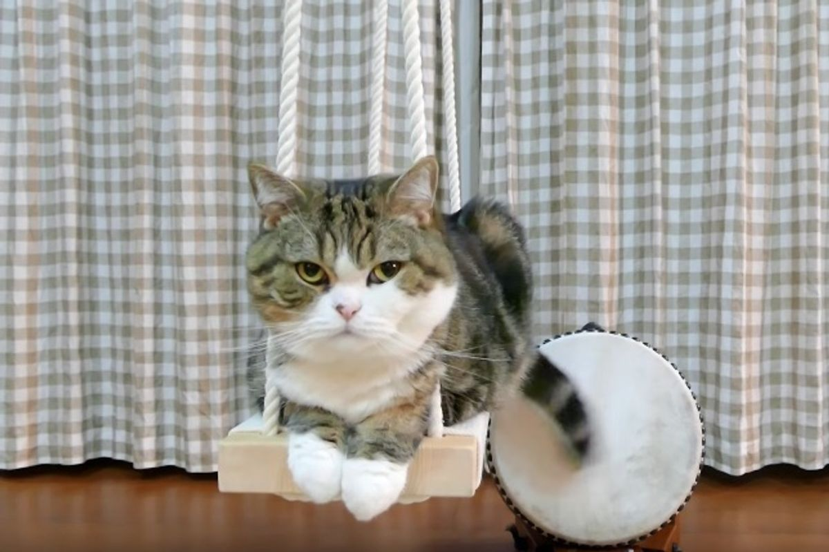 How This Kitty Plays Percussion is Quite Purrrfect!