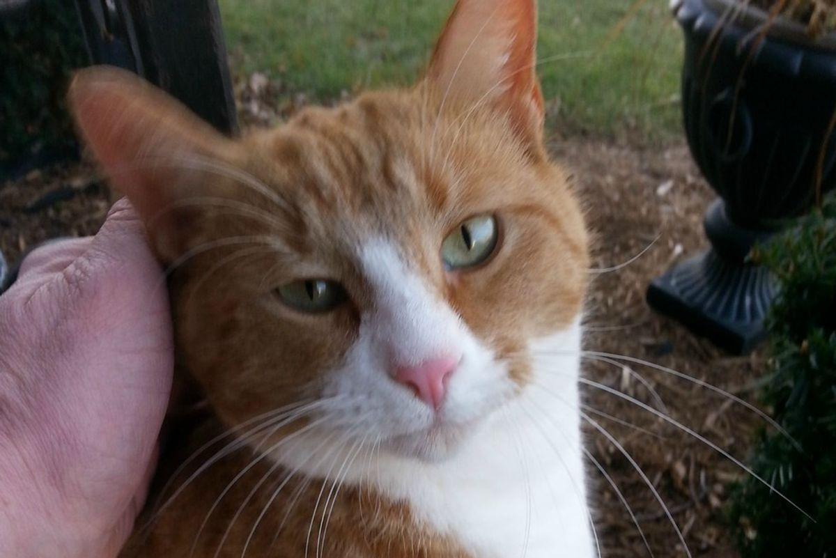 Man Cares for Shy Feral Cat, Years Later One Pet and Kitty is Hooked