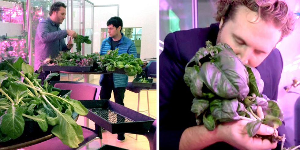 In-Store Vertical Farms Coming to One of Nation's Largest Retailers