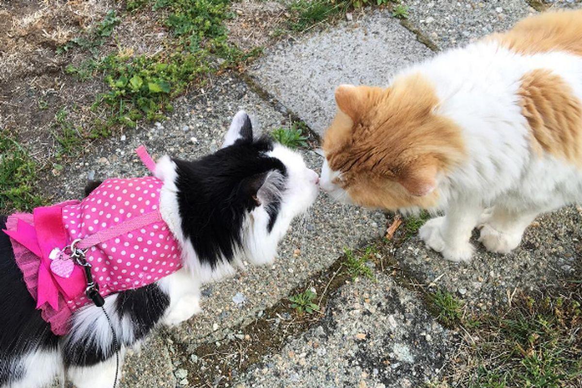 'Boy Next Door' Cat Wins Over Neighbor Cat