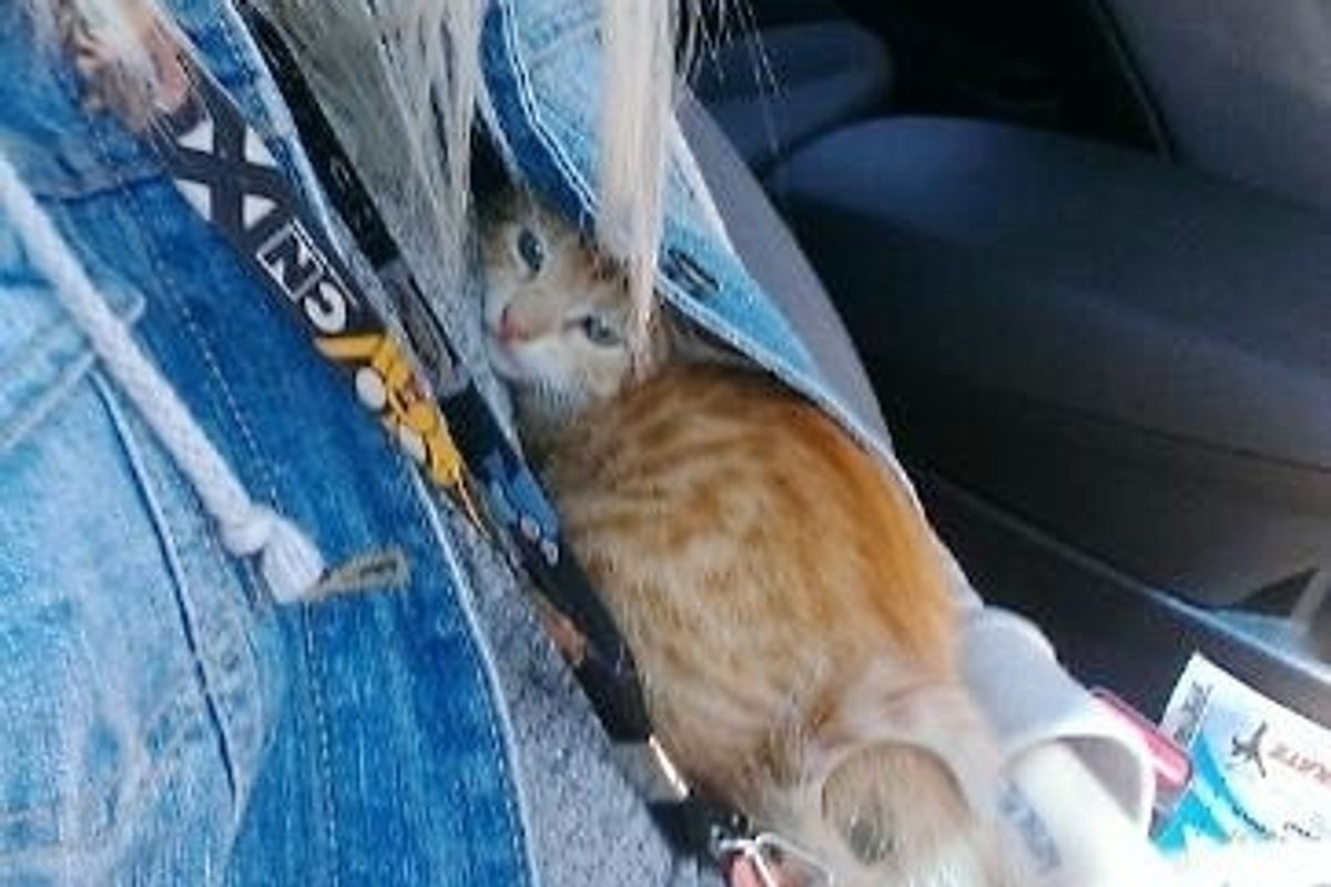 Stray Kitten So Scared He Hides in Jacket, Then A Few Hours After Adoption...