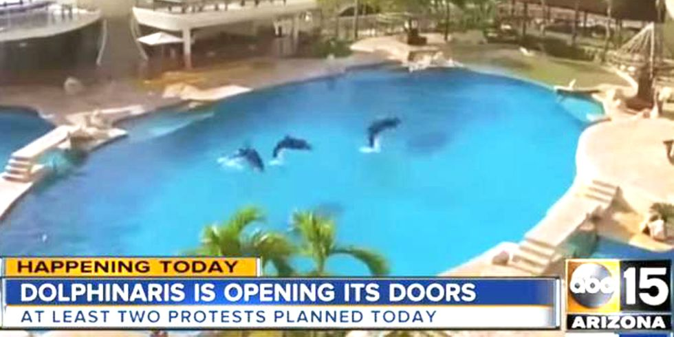 Dolphins Shipped From Hawaii to Arizona Desert for New Tourist Attraction