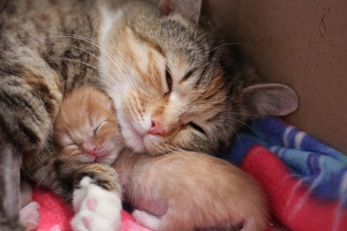 Feral Cat Can't Stop Cuddling Her Tiniest Baby After Being Saved, Now There's Only One Thing Missing...