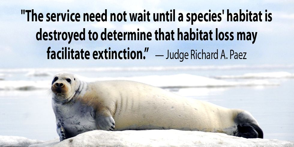Appeals Court: Animals Can Be Listed as Threatened Based on Climate Change Risk