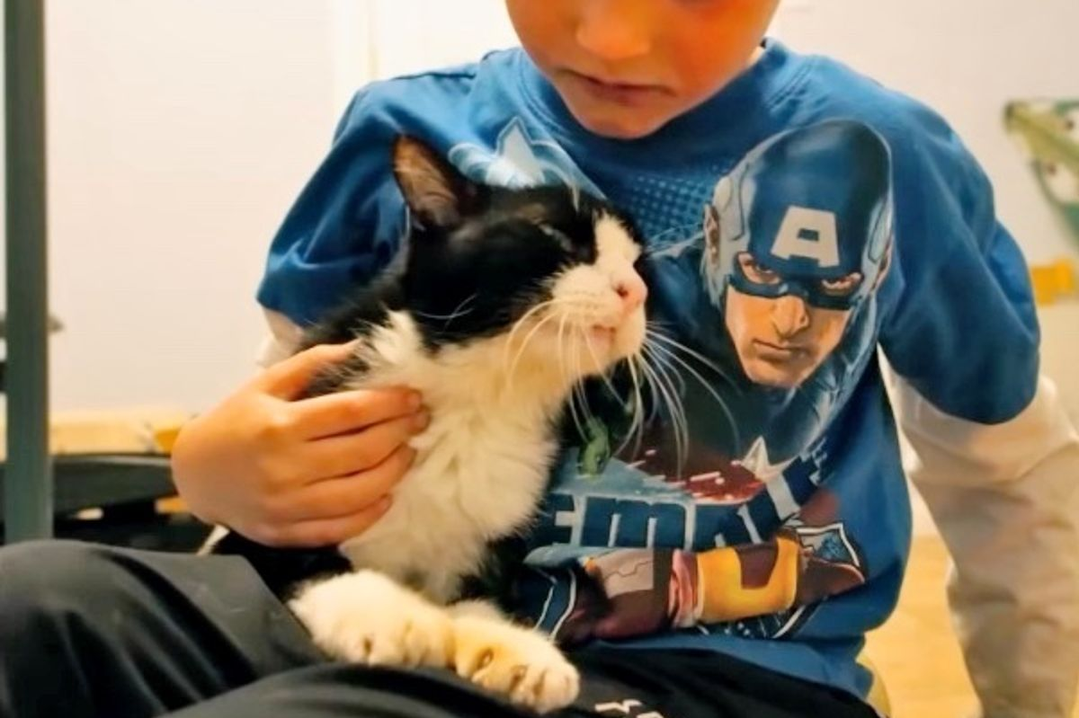 Cat Was 20 When He Found His Home, No One Expected Just How Much Love He Had