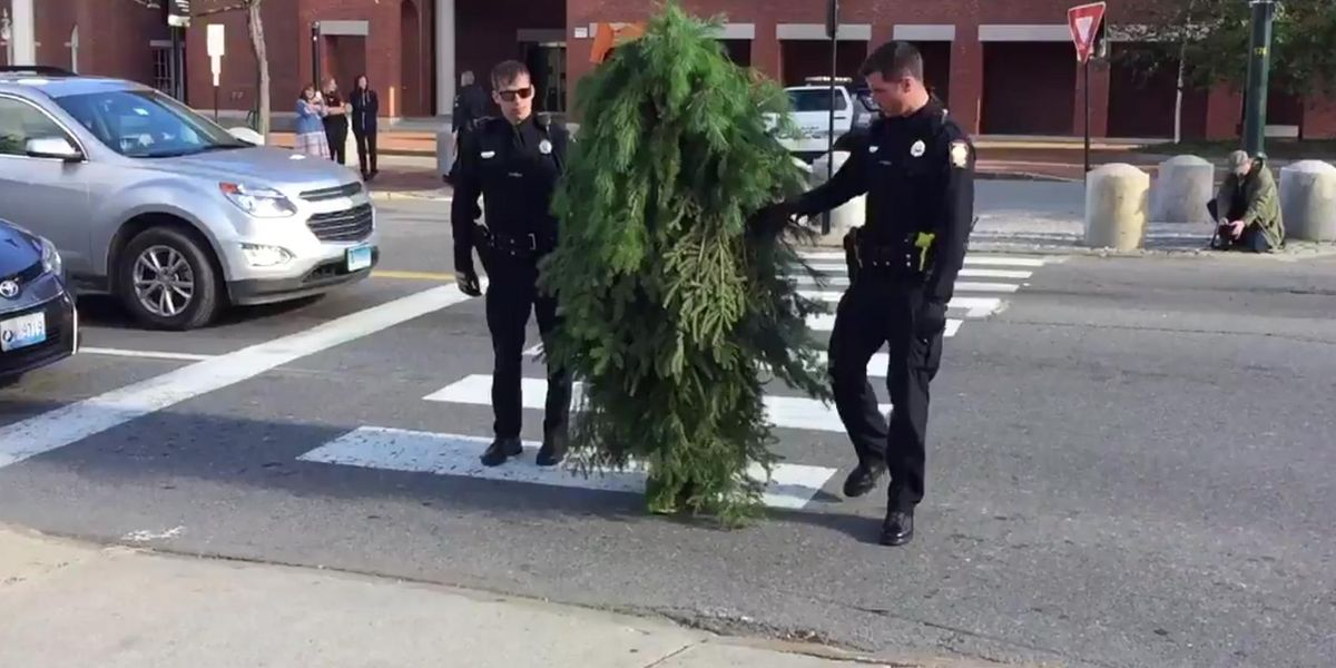 Maine Man Dressed Like A Tree Arrested For Blocking Traffic, Becomes Bliss Martyr
