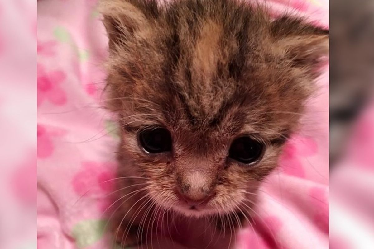 Kitten Left Behind in Trailer Park After Birth Fights to Live, Now Purrs Like Motor