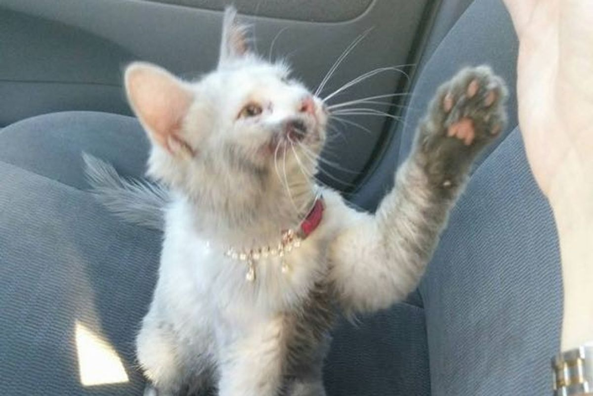Kindness Saves Kitty's Life and 4 Baths Reveal Her True Coat!