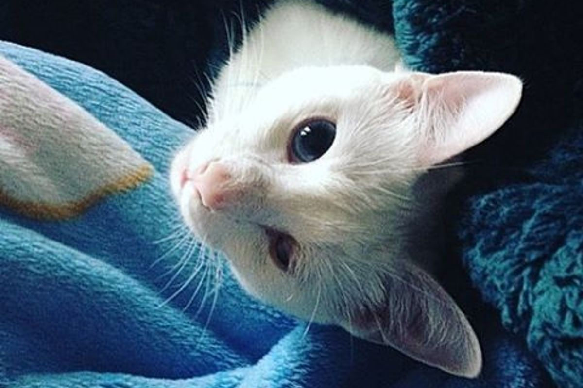 """Cat Couldn't Find Home Due to Her """"Bad"""" Eye, Woman Saves Her and the Kitty Returns the Favor"""