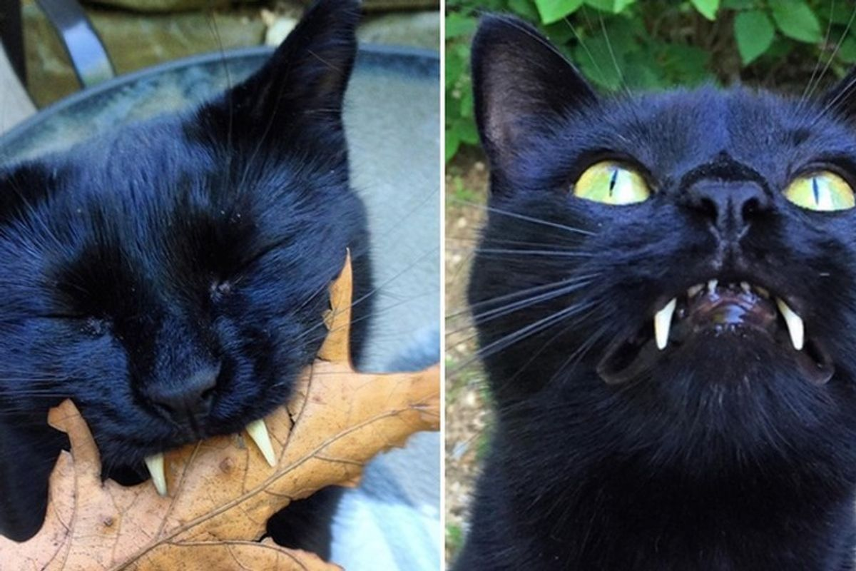 Woman Saves Kitty with 'Vampurr Fangs' From Streets, One Year After the Rescue...