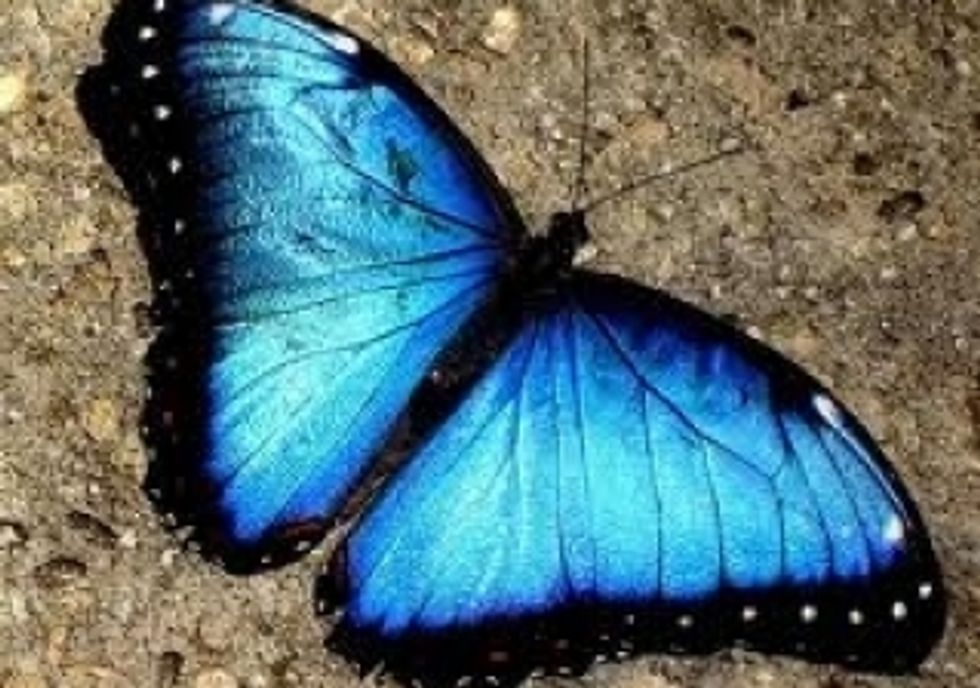 22 Wonderful Things That Come In Blue Only Good Tv Positive Uplifting Stories