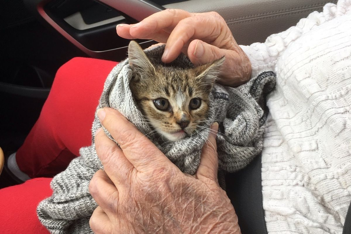 Kitten Rescued from Under Car Feels Loved in Her Rescuer's Arms